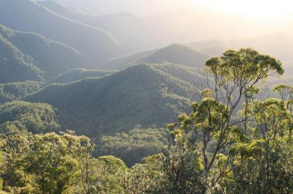 Rainforest dawn
